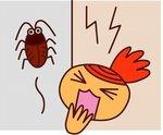 ゴキブリ対策は強力、置くだけ簡単な業務用駆除剤